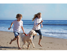 Anna Maria Vacations Dog Friendly Rentals