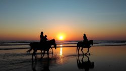 Horseback Riding on the Beach in Florida