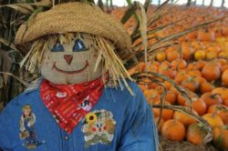 Pumpkin Festival in Bradenton Florida